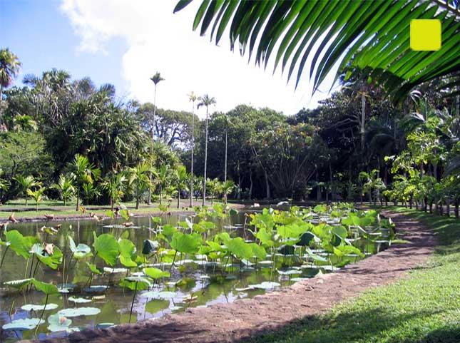 Le jardin de pamplemousse l 39 ile maurice siganture de for Jardin pamplemousse